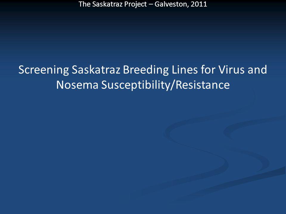 The Saskatraz Project – Galveston, 2011 Screening Saskatraz Breeding Lines for Virus and Nosema Susceptibility/Resistance