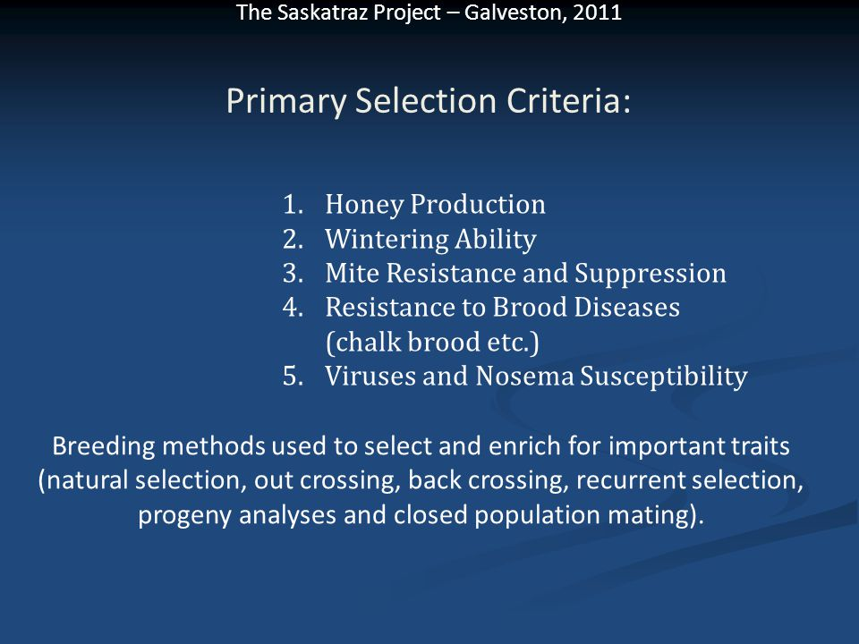 The Saskatraz Project – Galveston, 2011 Primary Selection Criteria: 1.Honey Production 2.Wintering Ability 3.Mite Resistance and Suppression 4.Resistance to Brood Diseases (chalk brood etc.) 5.Viruses and Nosema Susceptibility Breeding methods used to select and enrich for important traits (natural selection, out crossing, back crossing, recurrent selection, progeny analyses and closed population mating).