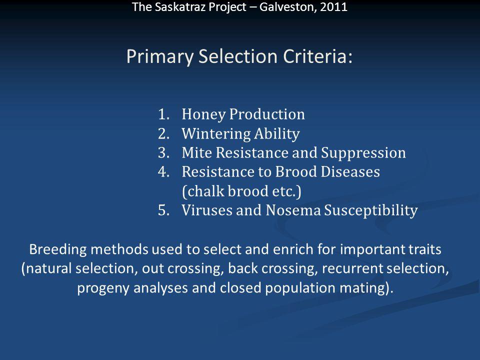 The Saskatraz Project – Galveston, 2011 Primary Selection Criteria: 1.Honey Production 2.Wintering Ability 3.Mite Resistance and Suppression 4.Resista