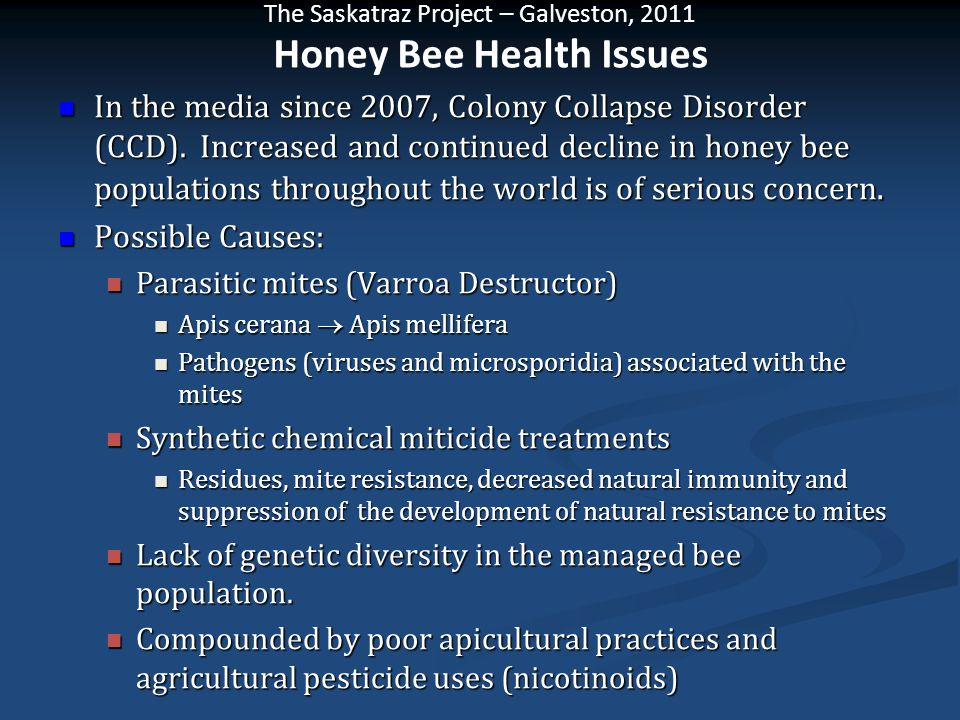 The Saskatraz Project – Galveston, 2011 In the media since 2007, Colony Collapse Disorder (CCD). Increased and continued decline in honey bee populati