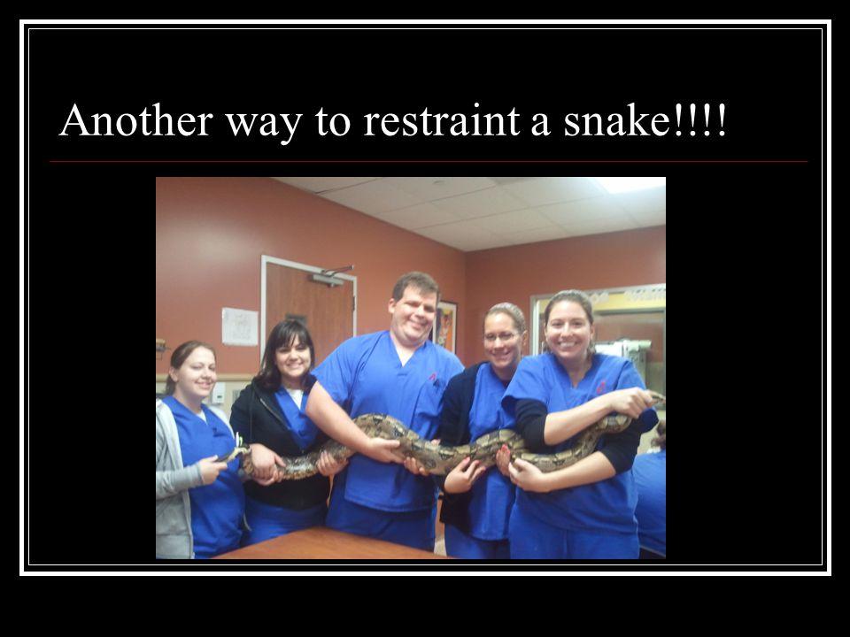 Snake transportation