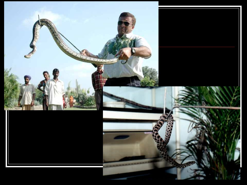Reptiles husbandry tools Hooks Forceps Probes