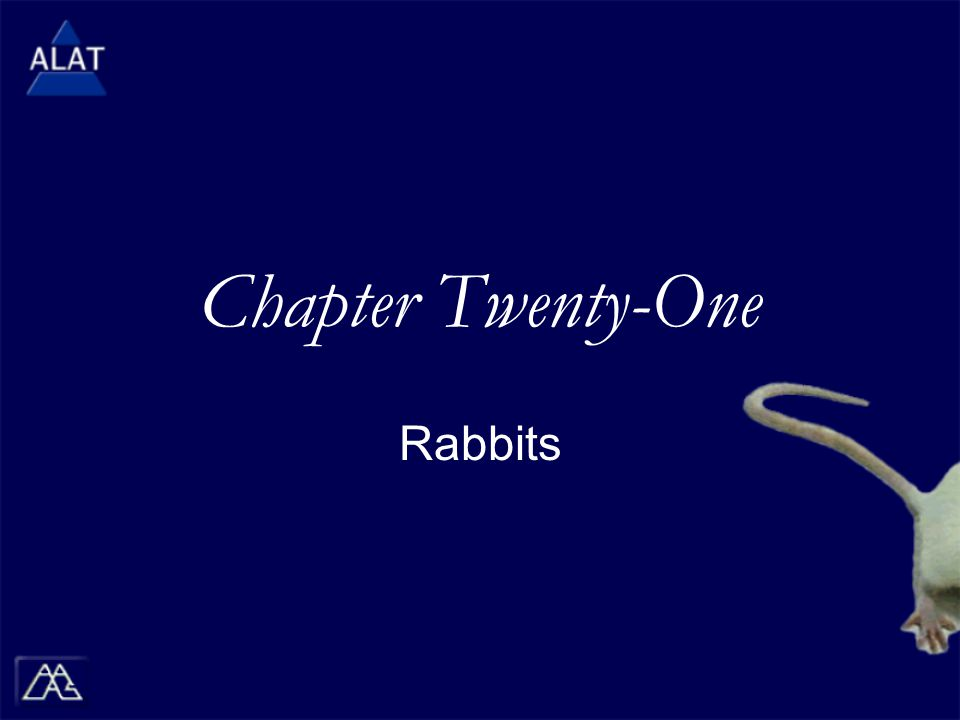 Chapter Twenty-One Rabbits