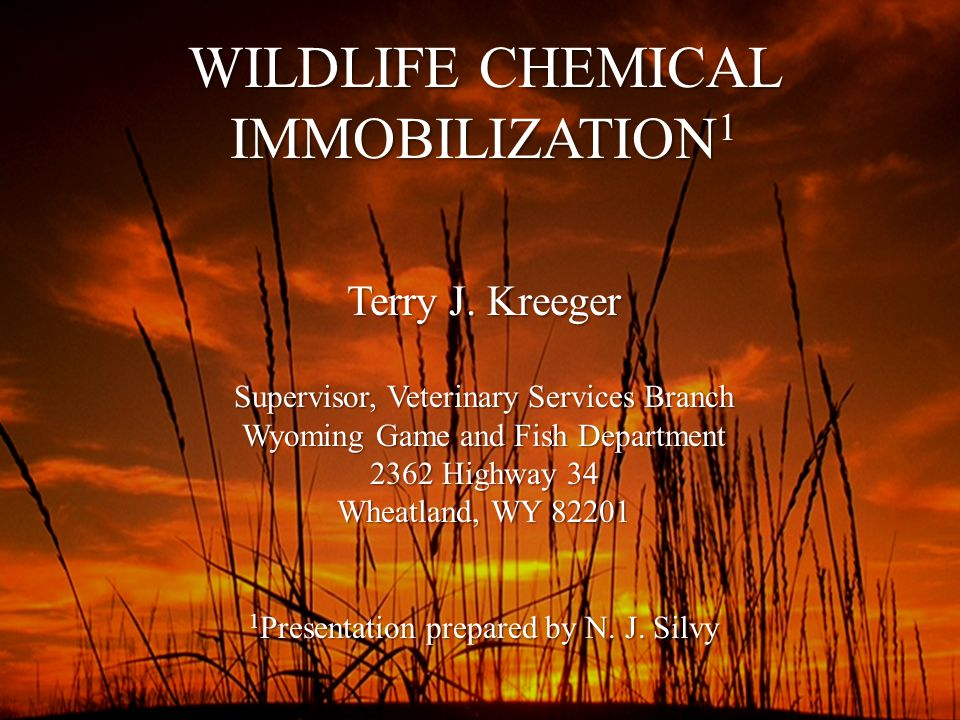 WILDLIFE CHEMICAL IMMOBILIZATION 1 Terry J.