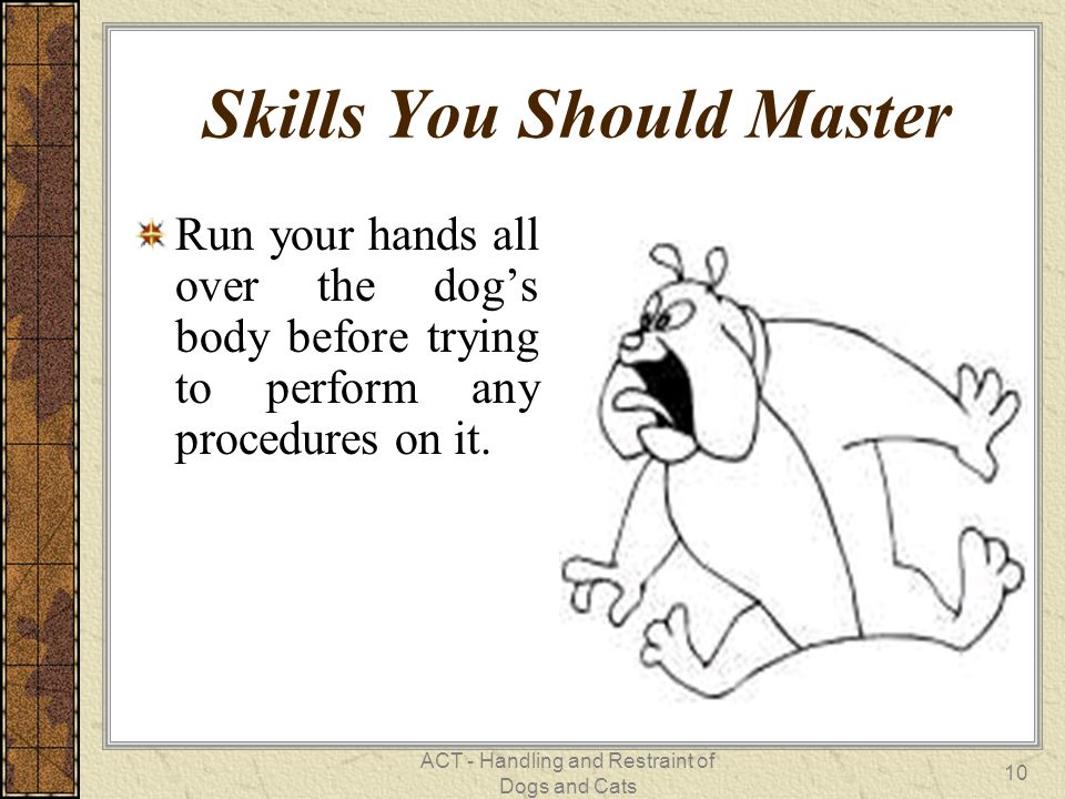 ACT - Handling and Restraint of Dogs and Cats 10 Skills You Should Master Run your hands all over the dog's body before trying to perform any procedures on it.