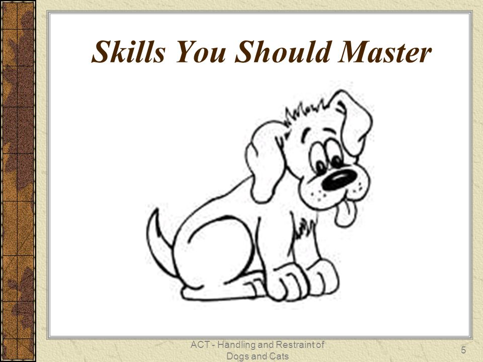 ACT - Handling and Restraint of Dogs and Cats 5 Skills You Should Master
