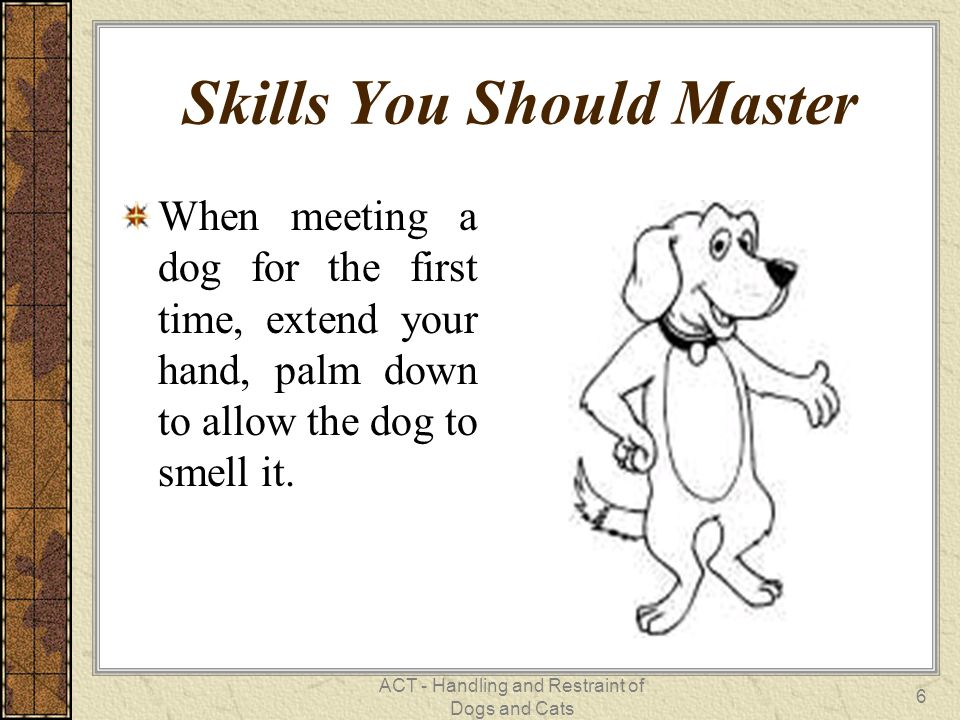 ACT - Handling and Restraint of Dogs and Cats 6 Skills You Should Master When meeting a dog for the first time, extend your hand, palm down to allow the dog to smell it.