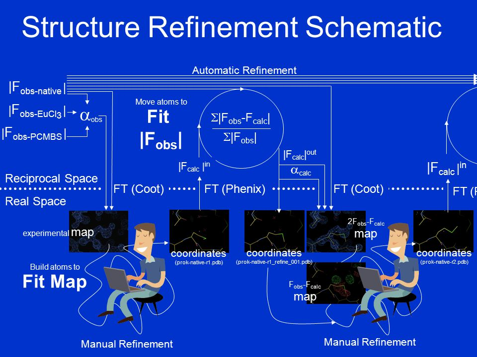  obs Structure Refinement Schematic Reciprocal Space Real Space |F obs-native | | F obs-PCMBS | | F obs-EuCl 3 | Fit Map FT (Coot) FT (Phenix) |F calc | in  |F obs -F calc |  |F obs | |F calc | out Manual Refinement Build atoms to FT (Coot) 2F obs -F calc map Fit |F obs | Move atoms to  calc Manual Refinement FT (Phenix) |F calc | in Automatic Refinement experimental map F obs -F calc map coordinates (prok-native-r1_refine_001.pdb) coordinates (prok-native-r2.pdb) coordinates (prok-native-r1.pdb)