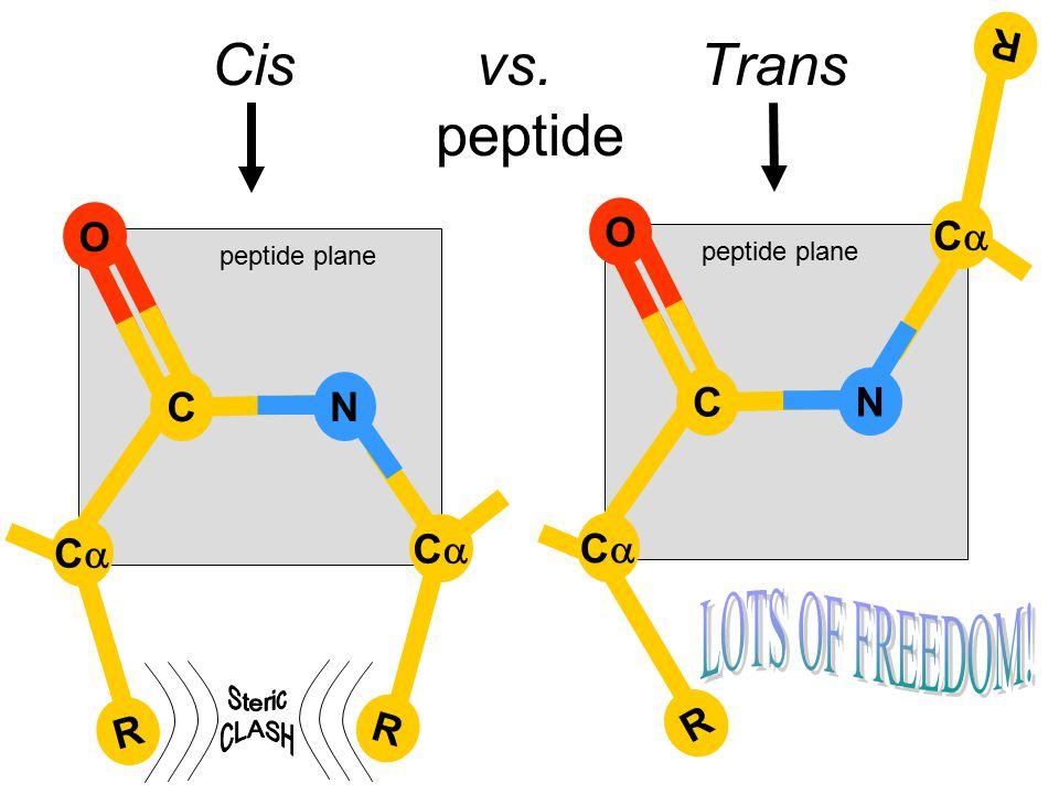R R Cis vs. Trans peptide CC C O N CC peptide plane R R C O N CC CC
