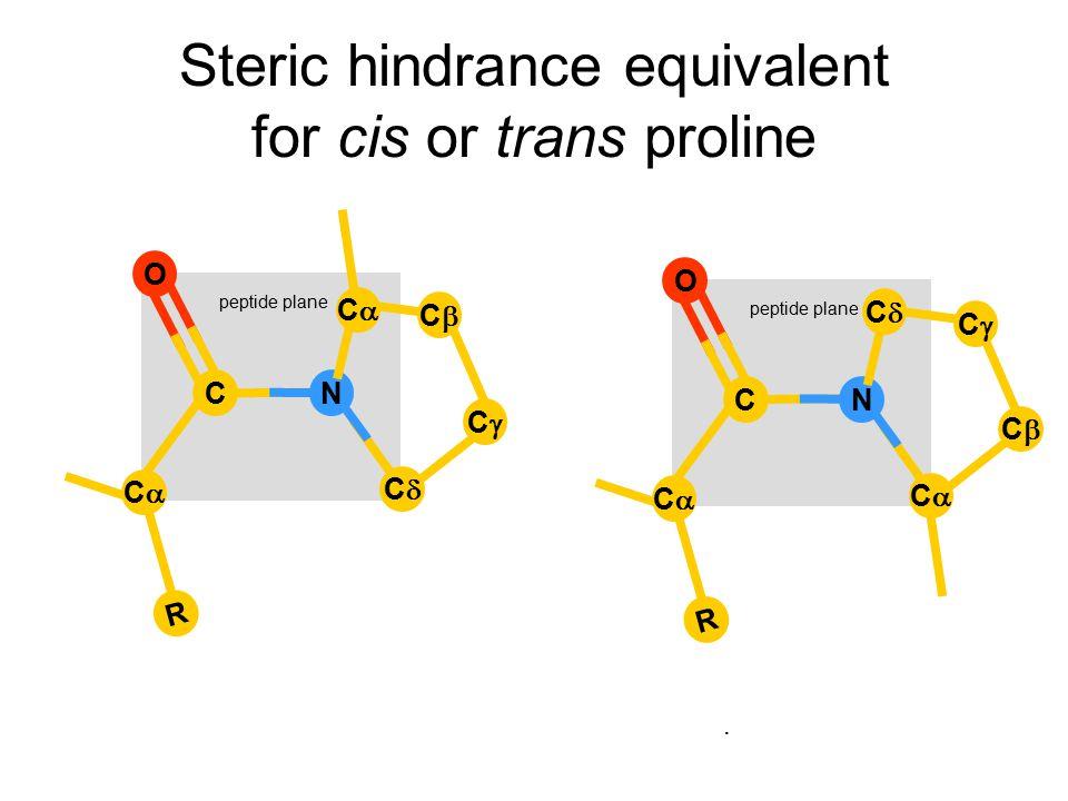 Steric hindrance equivalent for cis or trans proline. R CC CN CC peptide plane O R CC CN O CC CC CC CC CC CC CC