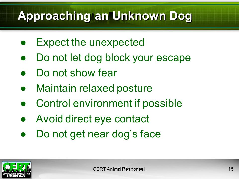 CERT Animal Response II15 ●Expect the unexpected ●Do not let dog block your escape ●Do not show fear ●Maintain relaxed posture ●Control environment if possible ●Avoid direct eye contact ●Do not get near dog's face Approaching an Unknown Dog