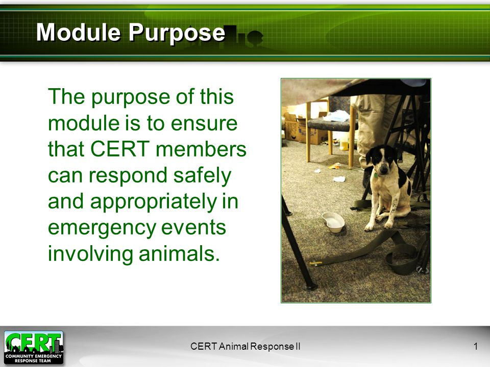 Caring for Injured Animals ●Act within framework of CERT training ●Perform sizeup ●Be careful: Stressed animal may bite, scratch, kick, or attack ●Restrain appropriately ●If unable to restrain, do not attempt first aid ●If possible, transport animal for professional help CERT Animal Response II42