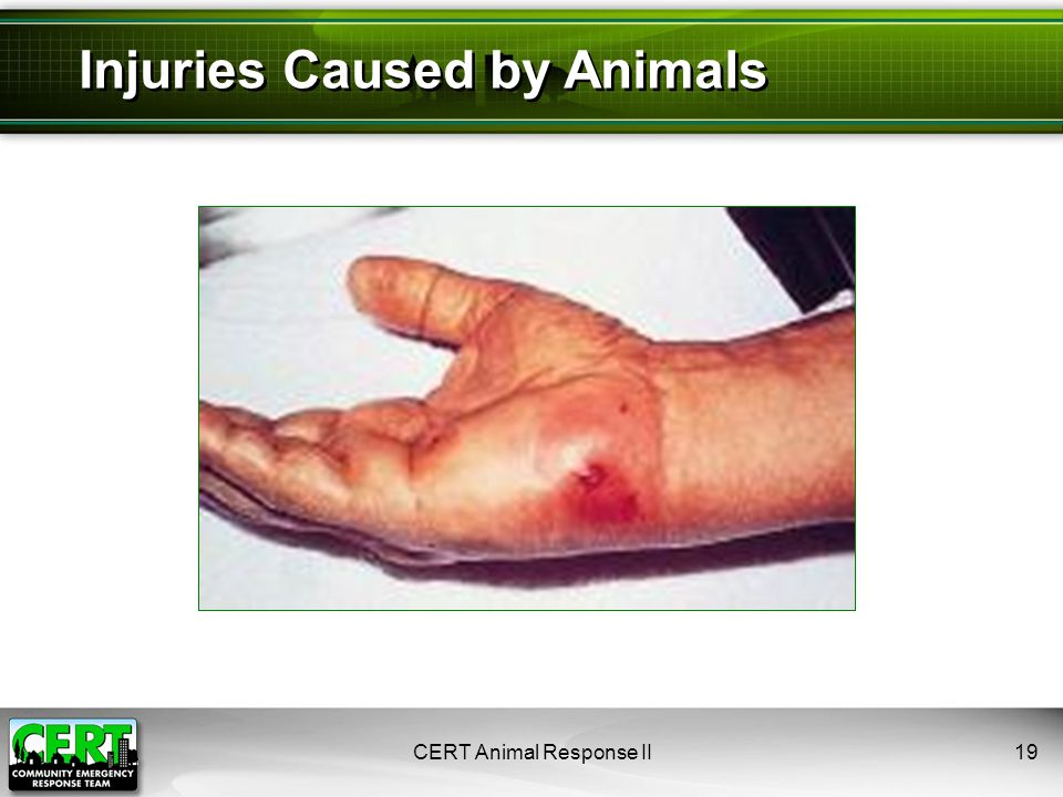 CERT Animal Response II19 Injuries Caused by Animals