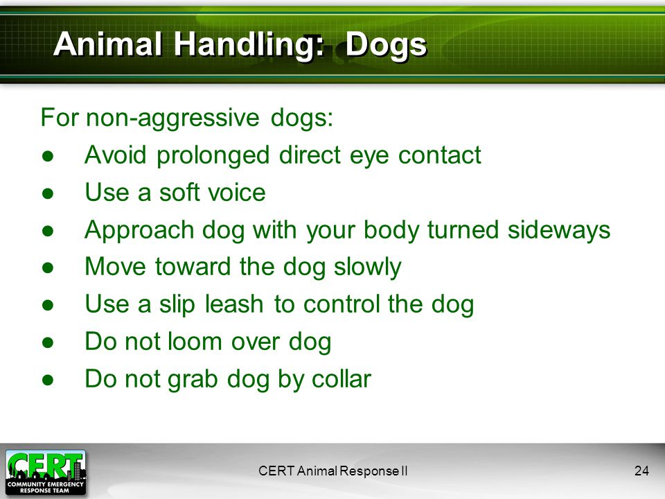 For non-aggressive dogs: ●Avoid prolonged direct eye contact ●Use a soft voice ●Approach dog with your body turned sideways ●Move toward the dog slowly ●Use a slip leash to control the dog ●Do not loom over dog ●Do not grab dog by collar CERT Animal Response II24 Animal Handling: Dogs