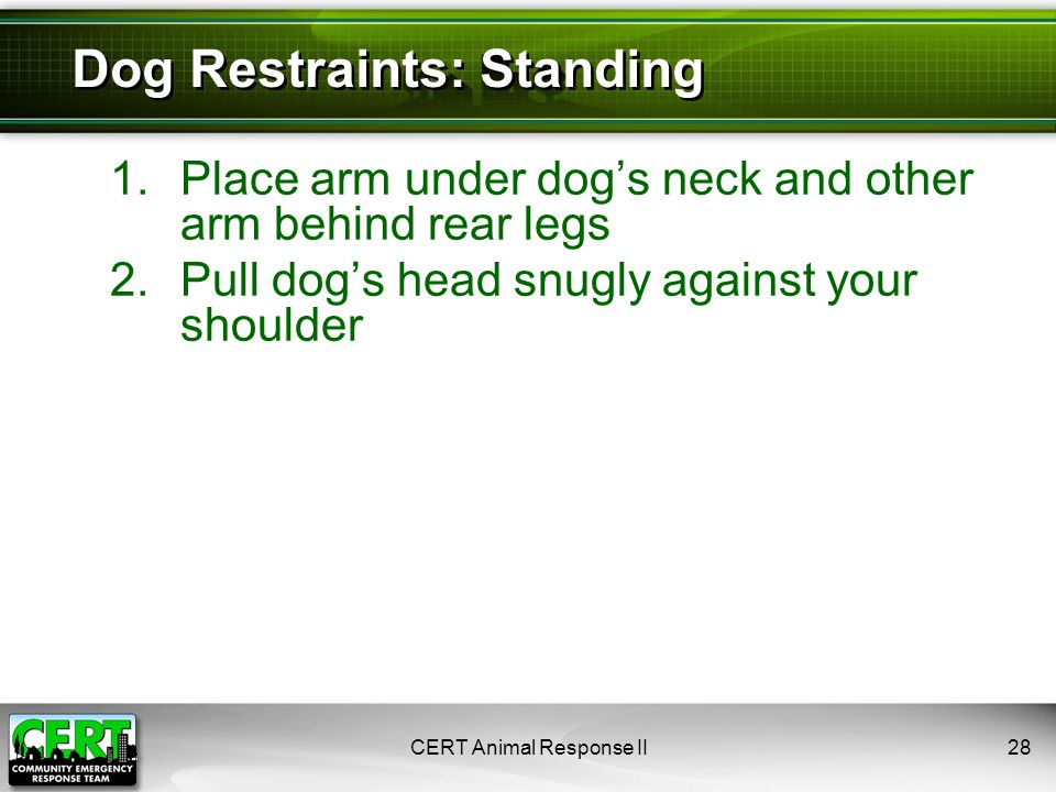 Dog Restraints: Standing 1.Place arm under dog's neck and other arm behind rear legs 2.Pull dog's head snugly against your shoulder CERT Animal Response II28