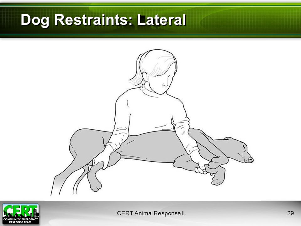 Dog Restraints: Lateral CERT Animal Response II29