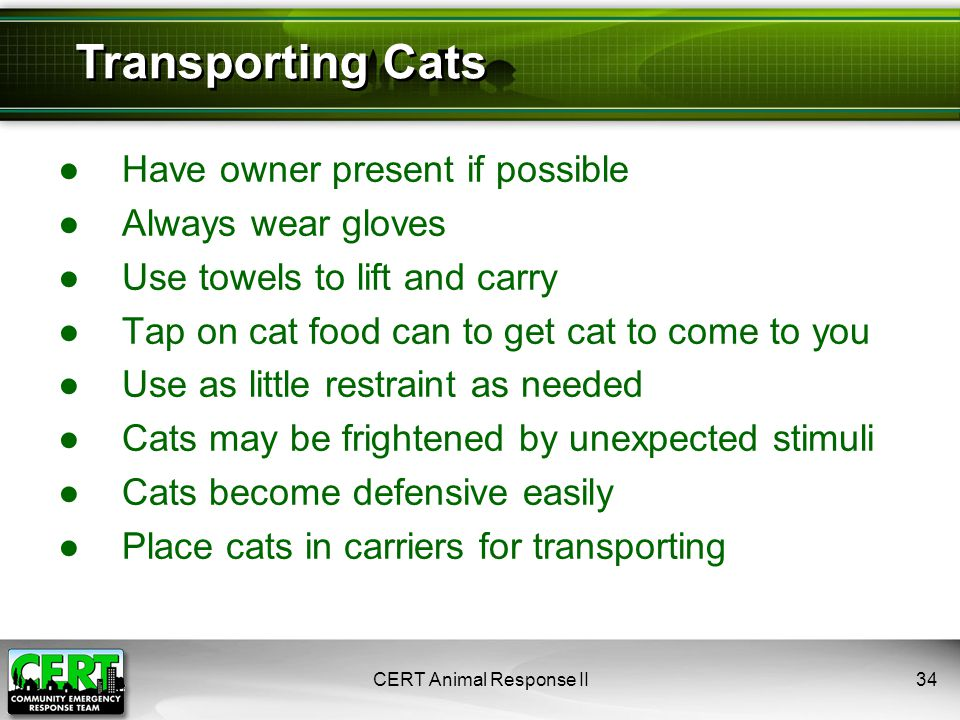●Have owner present if possible ●Always wear gloves ●Use towels to lift and carry ●Tap on cat food can to get cat to come to you ●Use as little restraint as needed ●Cats may be frightened by unexpected stimuli ●Cats become defensive easily ●Place cats in carriers for transporting CERT Animal Response II34 Transporting Cats