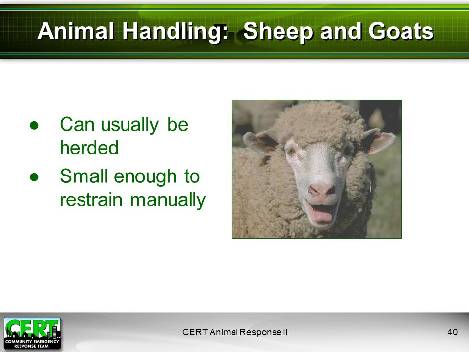 ●Can usually be herded ●Small enough to restrain manually CERT Animal Response II40 Animal Handling: Sheep and Goats
