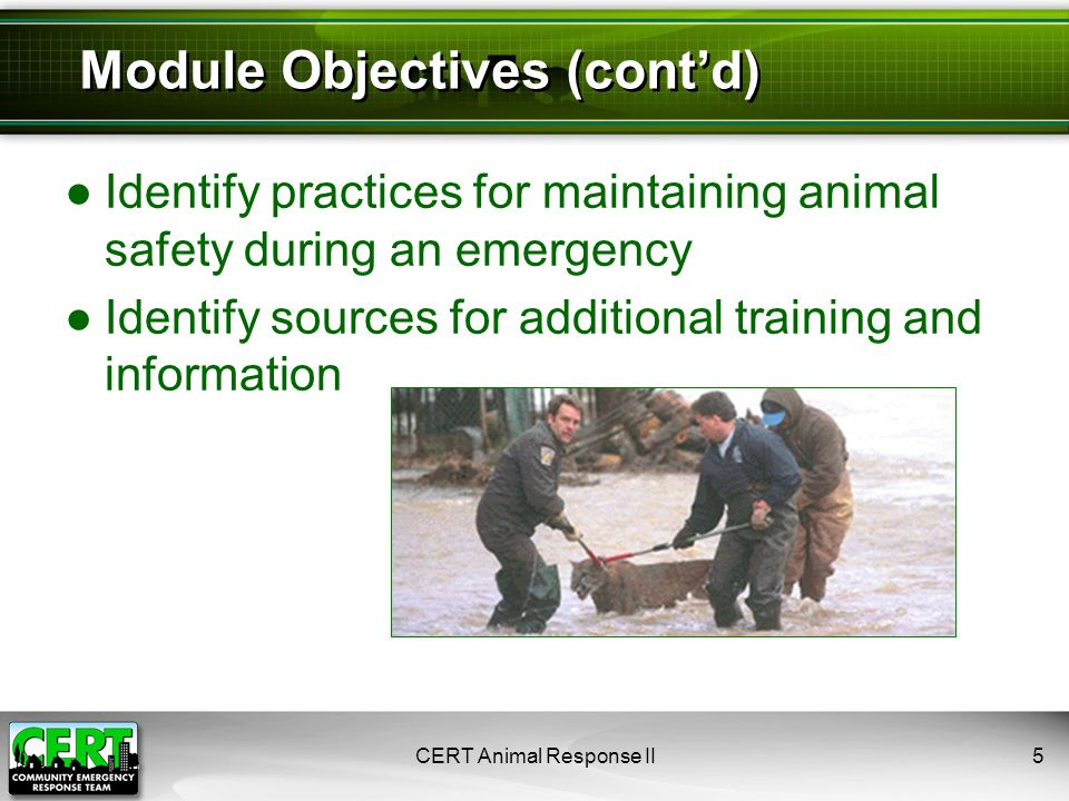 ●Use halter or lariat and wear gloves ●Use proper footwear ─ no steel-toed boots ●Wear heavy pants ●Use radios and whistles for communication ●Use fences, chutes, or panels to push livestock ●Line vehicles or people to push livestock ●Herd animals will move away if approached CERT Animal Response II36 Animal Handling: Livestock