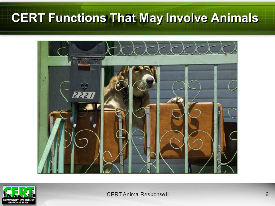 CERT Animal Response II6 CERT Functions That May Involve Animals