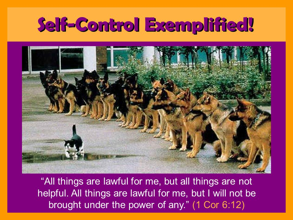 Something we must pursue –2 Peter 1:5 –And beside this giving all diligence, Self Control Self-Control Commanded