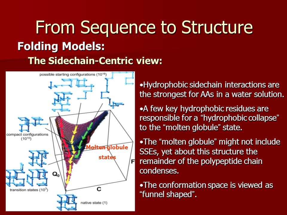 From Sequence to Structure Folding Models: The Sidechain-Centric view: Hydrophobic sidechain interactions are the strongest for AAs in a water solution.Hydrophobic sidechain interactions are the strongest for AAs in a water solution.
