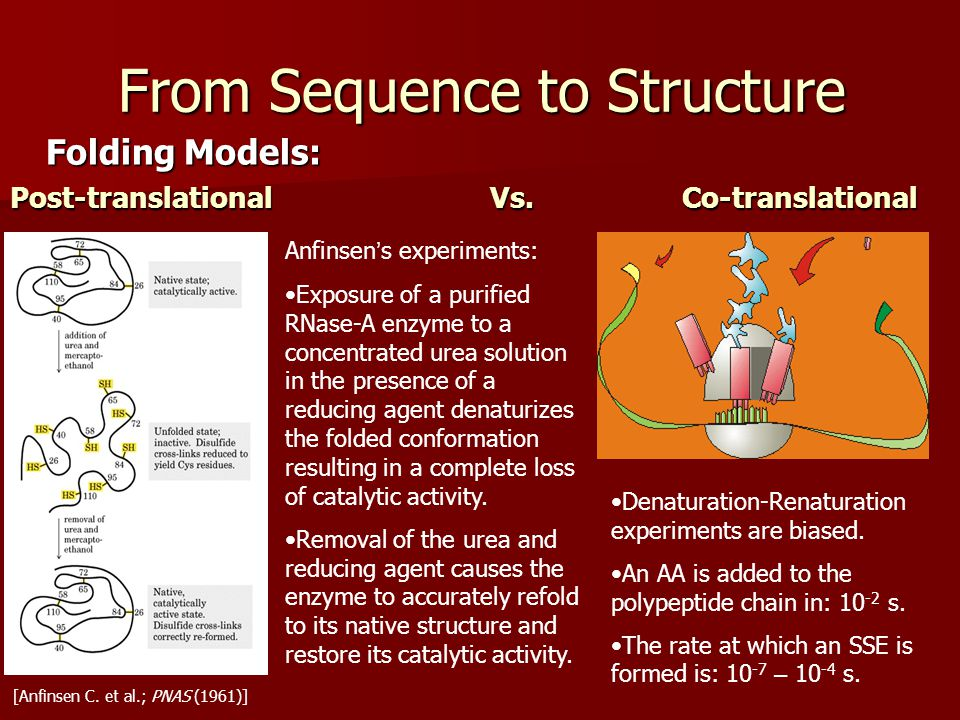 From Sequence to Structure Folding Models: Post-translationalVs.