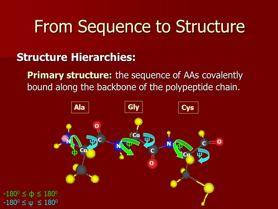 From Sequence to Structure Structure Hierarchies: Primary structure: the sequence of AAs covalently bound along the backbone of the polypeptide chain.