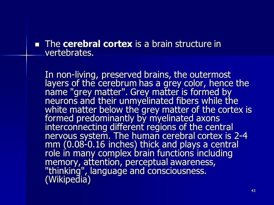 43 The cerebral cortex is a brain structure in vertebrates.