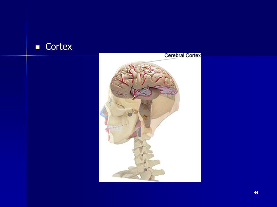 44 Cortex Cortex