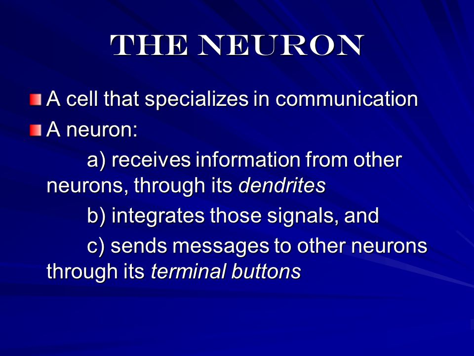 The neuron A cell that specializes in communication A neuron: a) receives information from other neurons, through its dendrites a) receives information from other neurons, through its dendrites b) integrates those signals, and b) integrates those signals, and c) sends messages to other neurons through its terminal buttons c) sends messages to other neurons through its terminal buttons