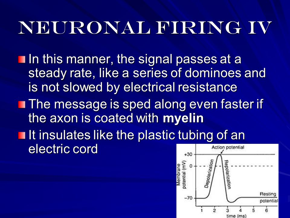 Neuronal Firing II An Action Potential is the transmission of the signal down the axon through a complex exchange of sodium and potassium ions When the action is over, the positive sodium, is pumped back out until next time
