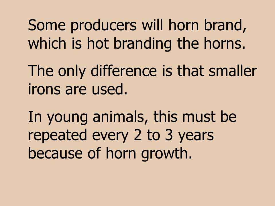 Some producers will horn brand, which is hot branding the horns. The only difference is that smaller irons are used. In young animals, this must be re