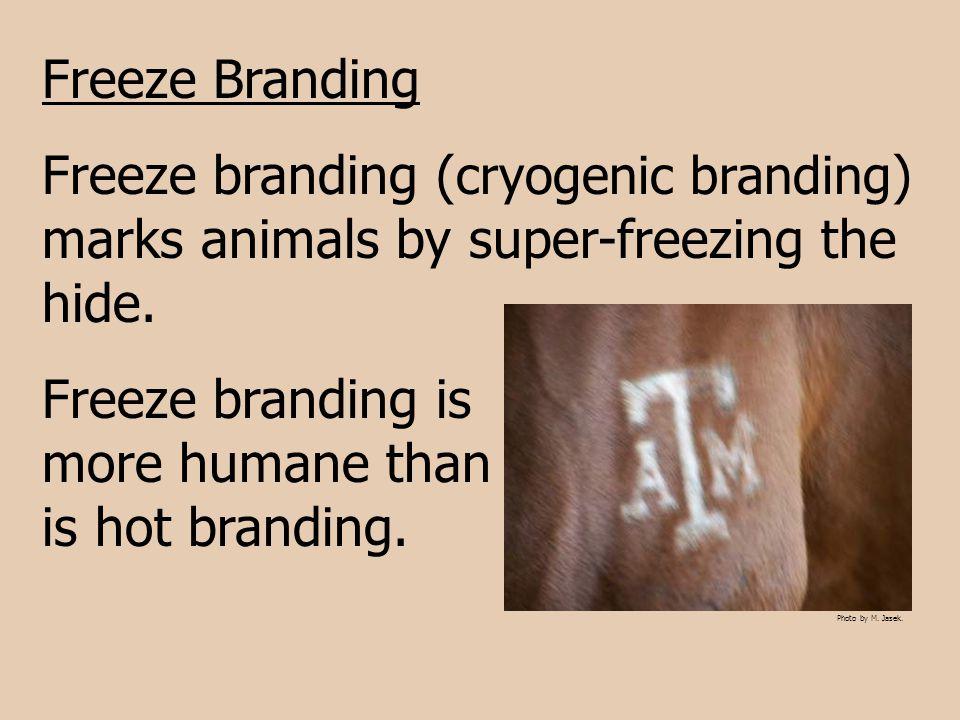Freeze Branding Freeze branding ( cryogenic branding ) marks animals by super-freezing the hide. Freeze branding is more humane than is hot branding.