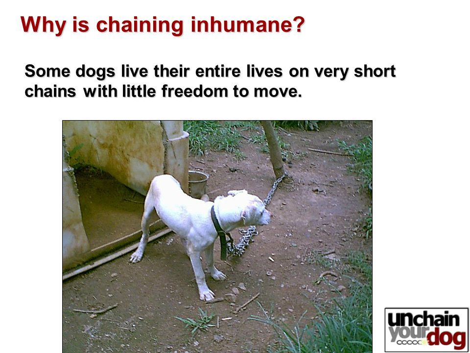 Some dogs live their entire lives on very short chains with little freedom to move.