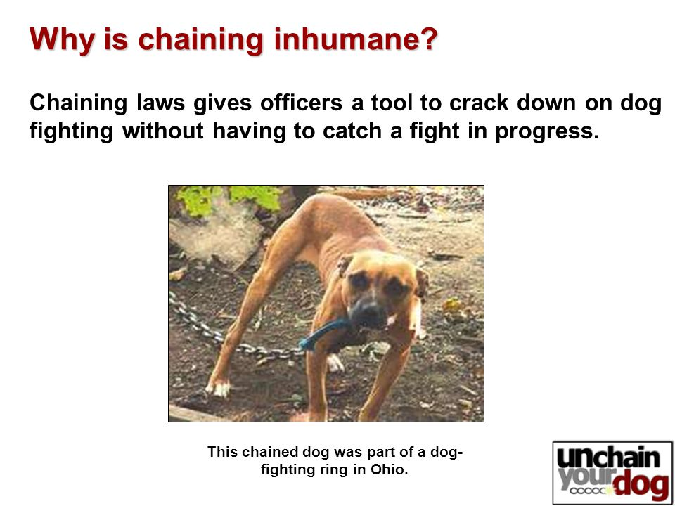 Chaining laws gives officers a tool to crack down on dog fighting without having to catch a fight in progress.