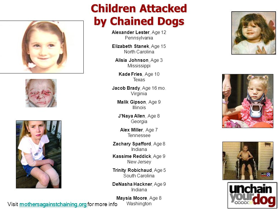 Children Attacked by Chained Dogs Alexander Lester, Age 12 Pennsylvania Elizabeth Stanek, Age 15 North Carolina Alisia Johnson, Age 3 Mississippi Kade Fries, Age 10 Texas Jacob Brady, Age 16 mo.