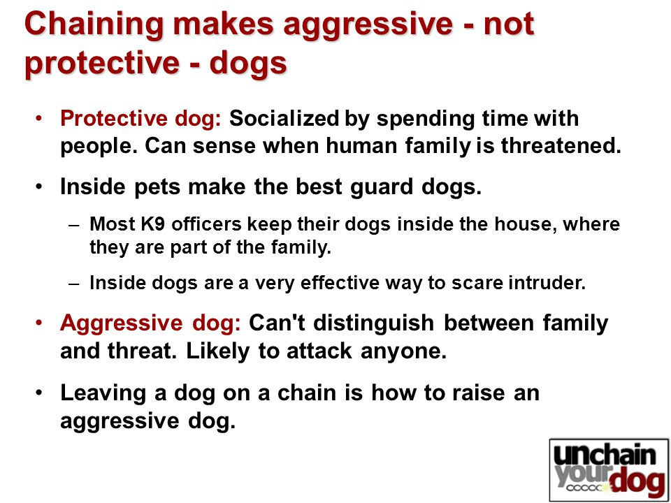 Chaining makes aggressive - not protective - dogs Protective dog: Socialized by spending time with people.