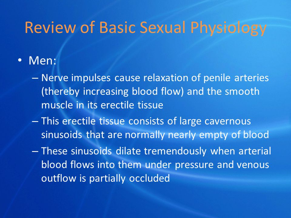 Review of Basic Sexual Physiology Men: – Nerve impulses cause relaxation of penile arteries (thereby increasing blood flow) and the smooth muscle in its erectile tissue – This erectile tissue consists of large cavernous sinusoids that are normally nearly empty of blood – These sinusoids dilate tremendously when arterial blood flows into them under pressure and venous outflow is partially occluded