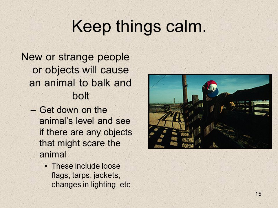 15 Keep things calm. New or strange people or objects will cause an animal to balk and bolt –Get down on the animal's level and see if there are any o