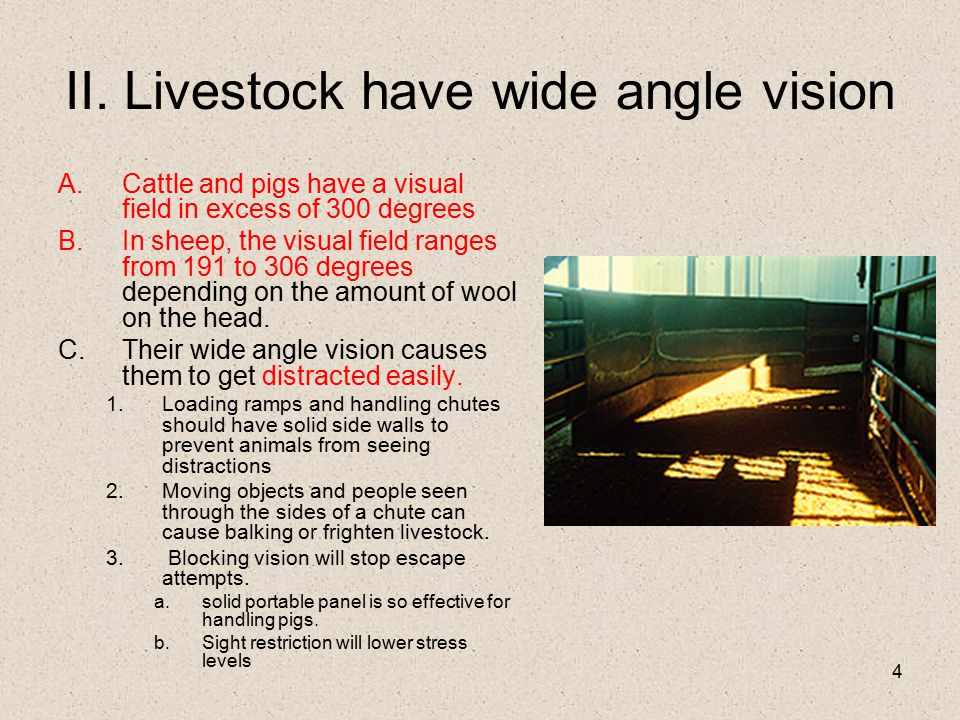 4 II. Livestock have wide angle vision A.Cattle and pigs have a visual field in excess of 300 degrees B.In sheep, the visual field ranges from 191 to