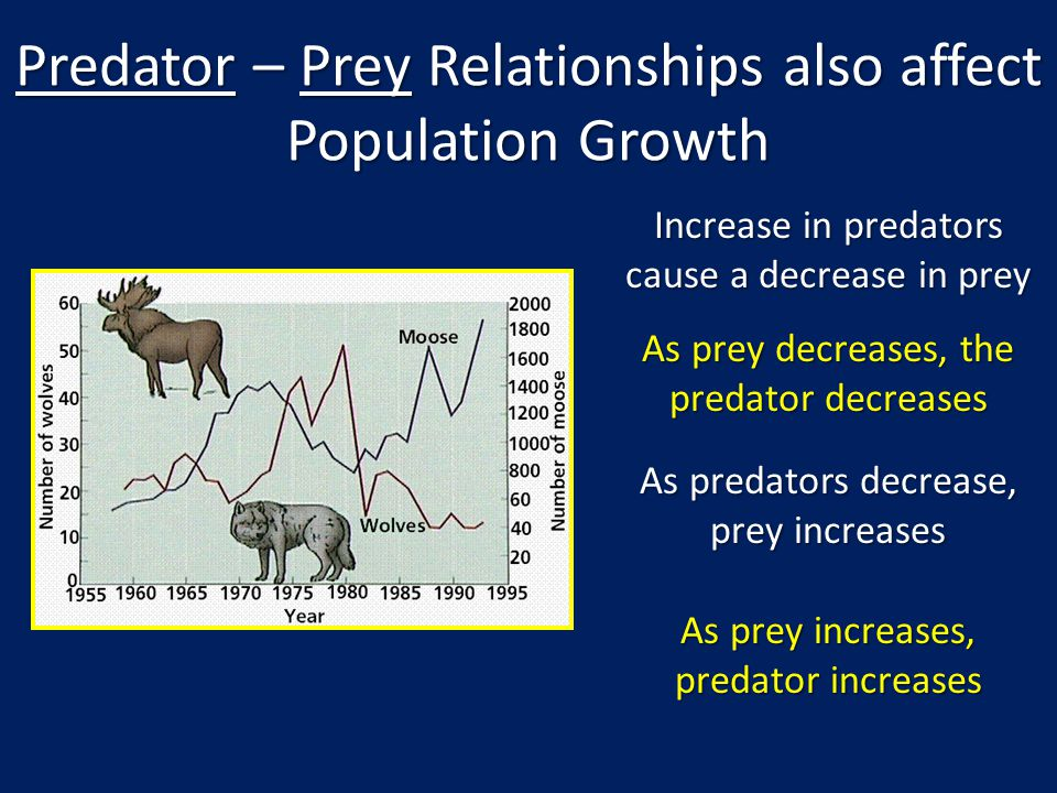 Predator – Prey Relationships also affect Population Growth Increase in predators cause a decrease in prey As prey decreases, the predator decreases A