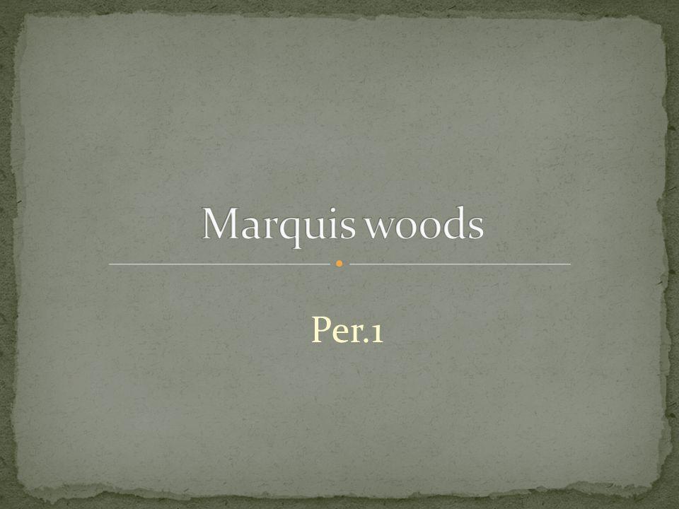 Per.1