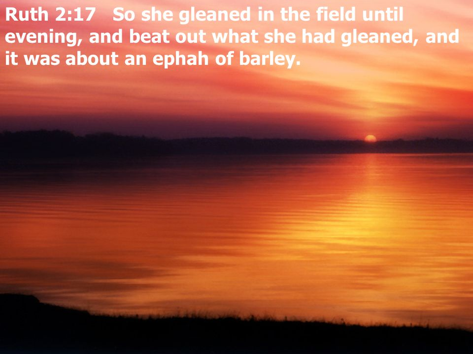 Ruth 2:17 So she gleaned in the field until evening, and beat out what she had gleaned, and it was about an ephah of barley.