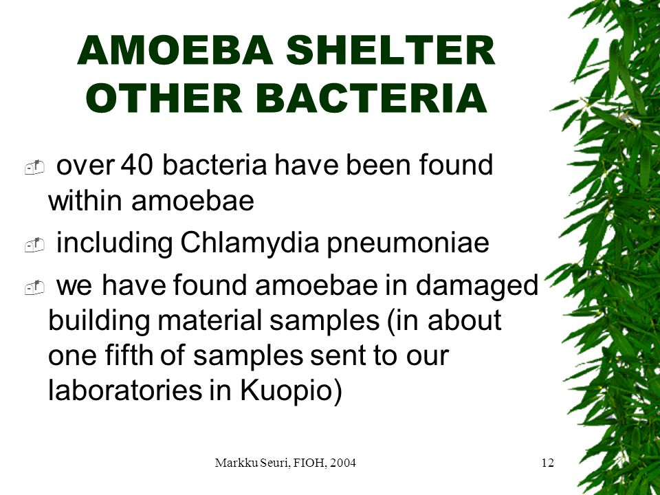 Markku Seuri, FIOH, 200412 AMOEBA SHELTER OTHER BACTERIA  over 40 bacteria have been found within amoebae  including Chlamydia pneumoniae  we have found amoebae in damaged building material samples (in about one fifth of samples sent to our laboratories in Kuopio)