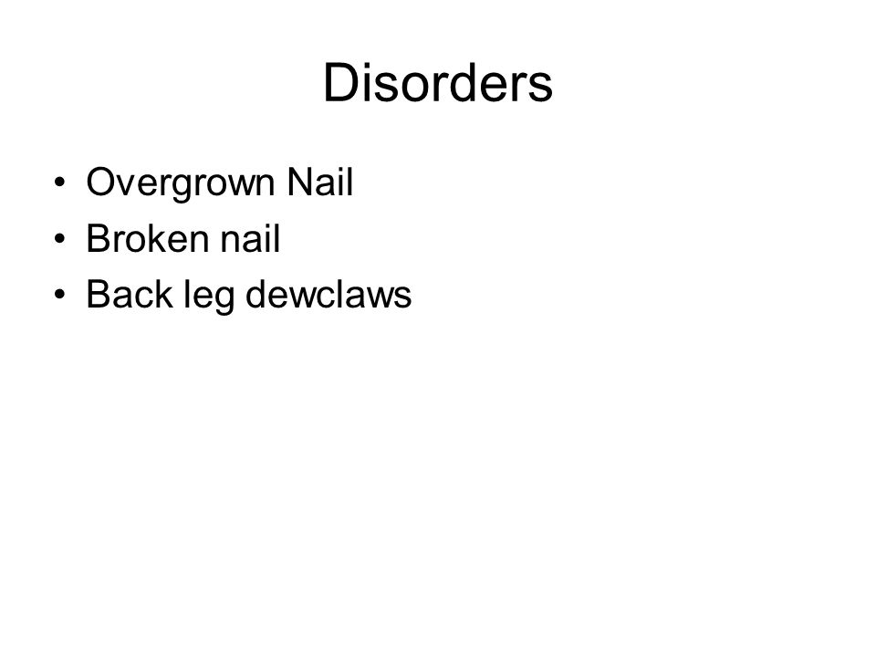 Disorders Overgrown Nail Broken nail Back leg dewclaws