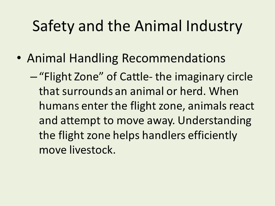 Safety and the Animal Industry Animal Handling Recommendations – Flight Zone of Cattle- the imaginary circle that surrounds an animal or herd.