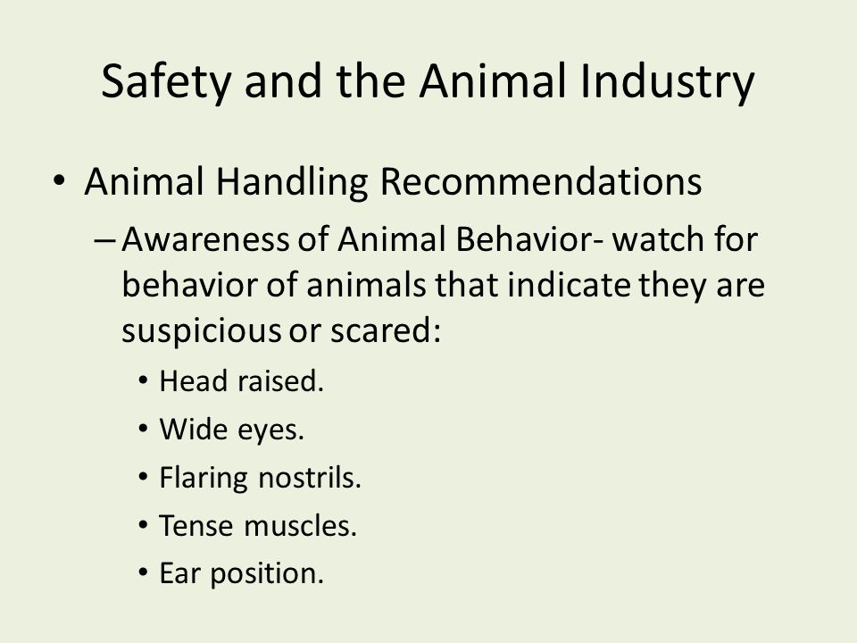 Safety and the Animal Industry Animal Handling Recommendations – Awareness of Animal Behavior- watch for behavior of animals that indicate they are su
