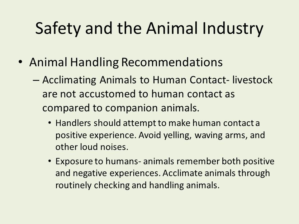 Safety and the Animal Industry Animal Handling Recommendations – Acclimating Animals to Human Contact- livestock are not accustomed to human contact a