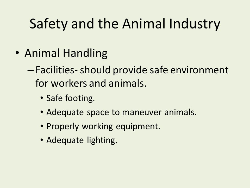 Safety and the Animal Industry Animal Handling – Facilities- should provide safe environment for workers and animals.